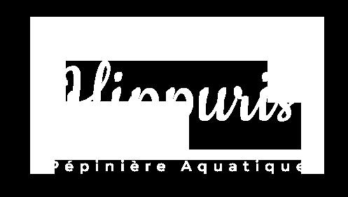 photo du logo hippuris