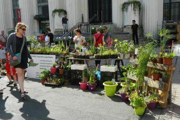 photo de stand de la foire aux plantes de villeurbanne